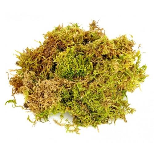 Moss Fibers - 50g prepack
