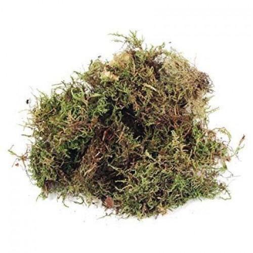 Moss Fiber