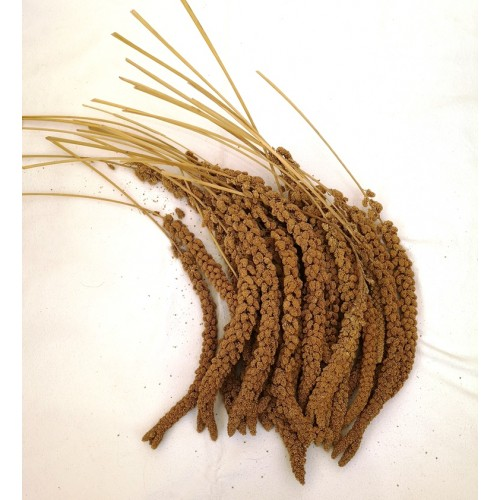 Millet Spray - French Yellow